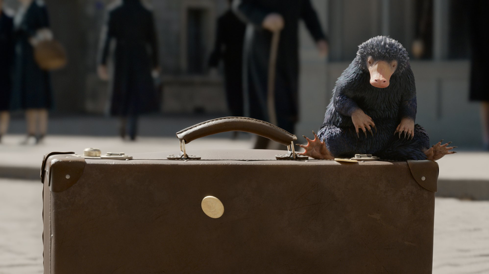 Fantastic Beasts: A Niffler on Newt's briefcase